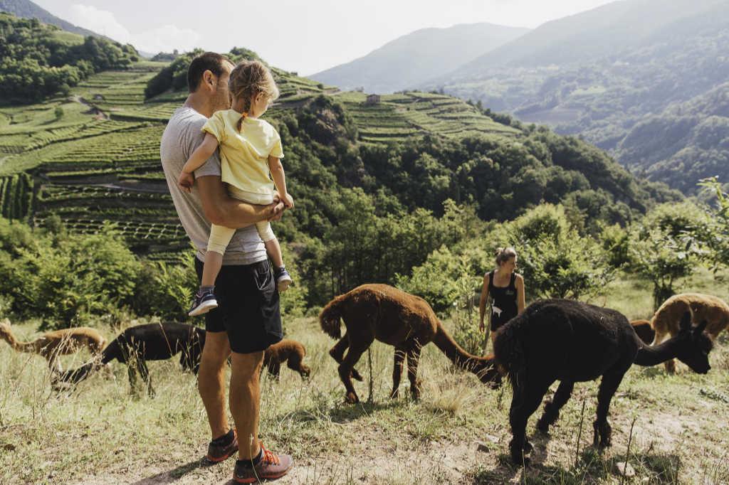 Die Hochebene des Cembratals mit der Alpaka-Herde von Silpaca. Foto: Silpaca für Noromaniac