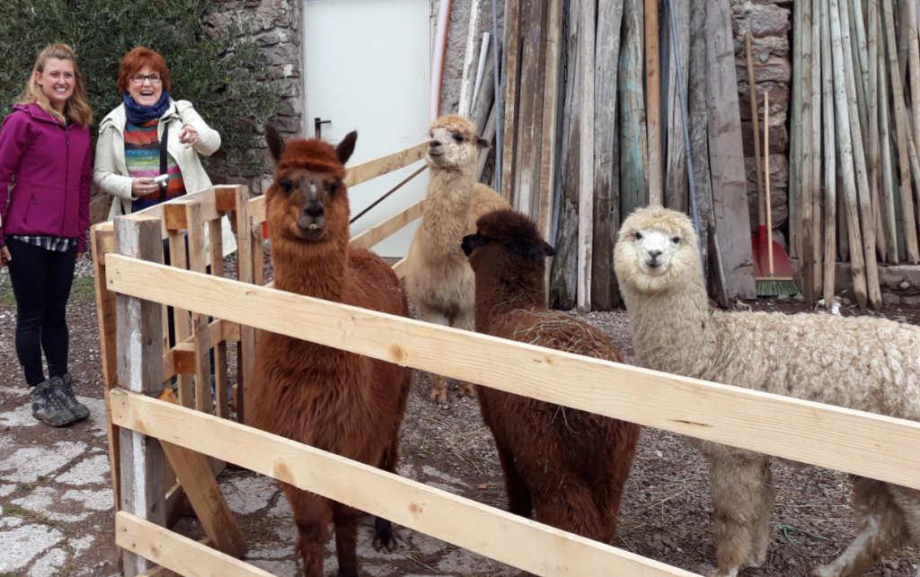 Ilaria Baldo, Katrin Walter mit vier Tieren der Alpaka-Herde von Silpaca. Foto: Silpaca für Noromaniac