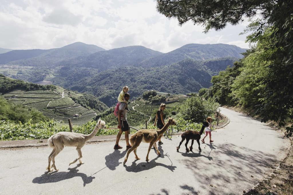Alpaka-Trekking im Cembratal vor der Kulisse der imposanten Berge. Foto: Silpaca für Noromaniac, Katrin Walter