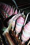 Hier sieht man die Spulen oder Spindeln mit den aufgewickelten Garnen mit Farbverlauf.