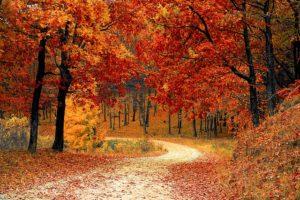 Herbstlaub, irre Farben, die sich auch in der Noro Silk Garden 341 und 4ply 341 wiederfinden