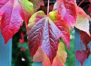 Vom Herbst verfärbte Blätter: Farben, wie auch in der Noro Silk Garden 4ply 341 vorhanden sind