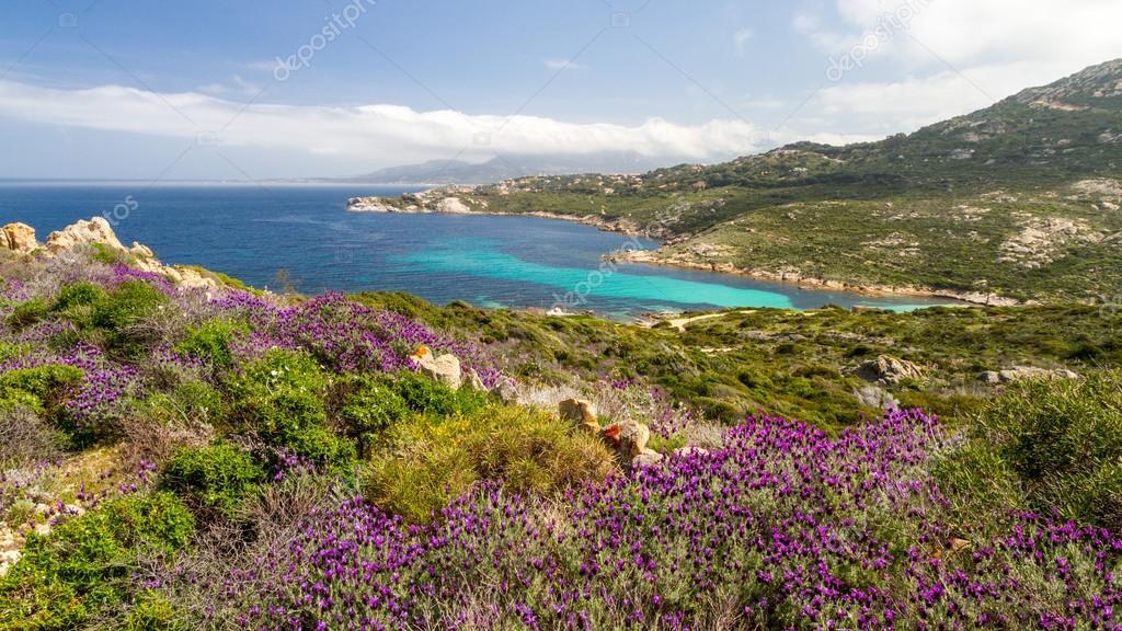 La macchia mediterranea (Foto Jon Ingall, Deposit)