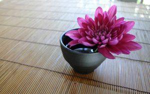 Pinkfarbene Chrysantheme bei Noromaniac als Symbol für Noro Sekku oder das jap. Chrysanthemenfest. Foto: Pixabay