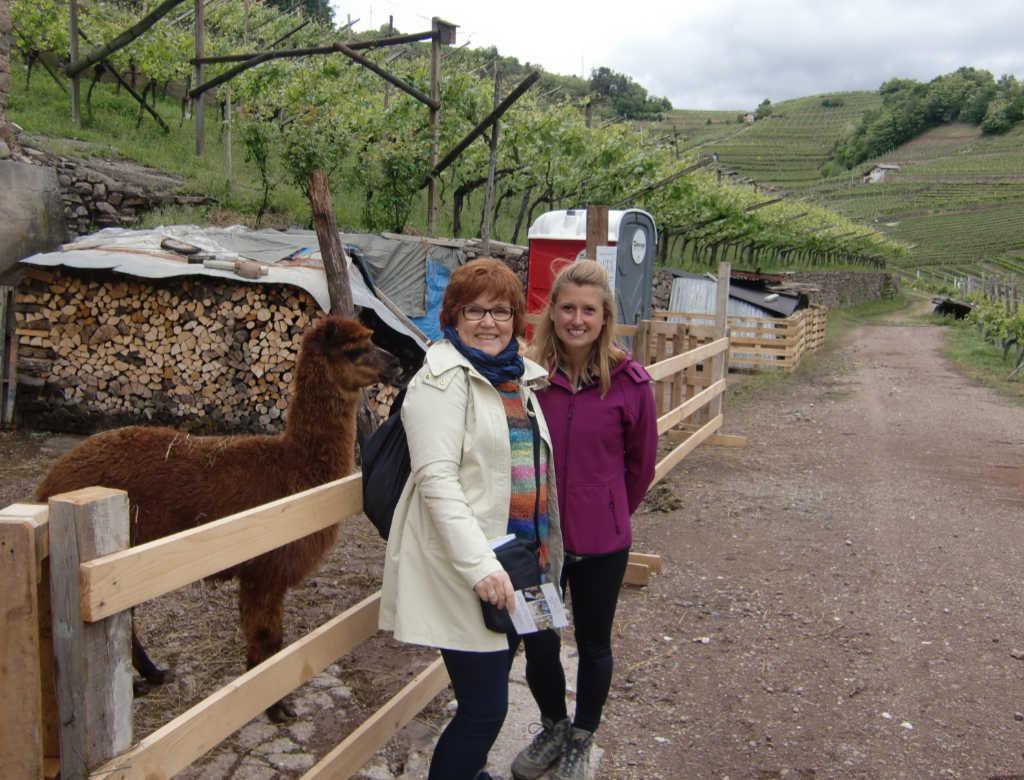 Katrin Walter zu Besuch auf der Alpaka-Farm von Ilaria Baldo im Cembratal inmitten der Weinterrassen. Foto: Mara Lona