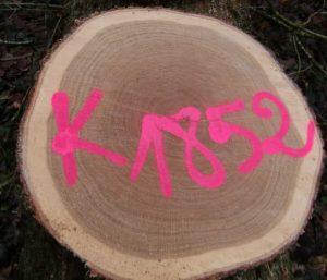 Scheibe eines Baumstamms mit pinkenfarbenen Zeichen. Illustration für Holla die Waldfee Tuch aus Noro Silk Garden Sock #370. Foto: Katrin Walter, Noromaniac