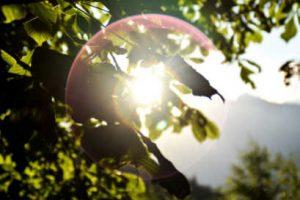 Sonne schimmert durch Blätter und bildet Kreis als Sinnbild der Geburt von Holla die Waldfee. Illustration für Schal-Tuch aus Noro Silk Garden Sock #370. Foto: Pixabay für Noromaniac