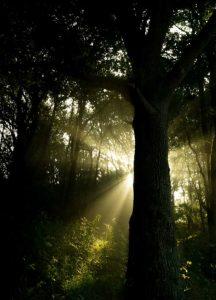Licht im Wald. Illustration für Holla die Waldfee Tuch aus Noro Silk Garden Sock #370. Foto: Pixabay für Noromaniac