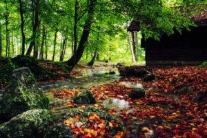 Kleiner Bach fließt durch den Wald im Herbst. Illustration für Holla die Waldfee Tuch aus Noro Silk Garden Sock #370. Foto: Pixabay für Noromaniac