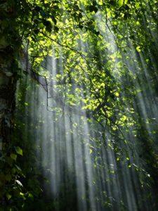 Leichter Nebel. Lichteinfall im Wald als Illustration für Holla die Waldfee Tuch aus Noro Silk Garden Sock #370. Foto: Pixabay für Noromaniac