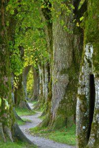 Dicht-stehende Bäume und Weg durch den Wald als Illustration für Holla die Waldfee Tuch aus Noro Silk Garden Sock #370. Foto: Pixabay für Noromaniac