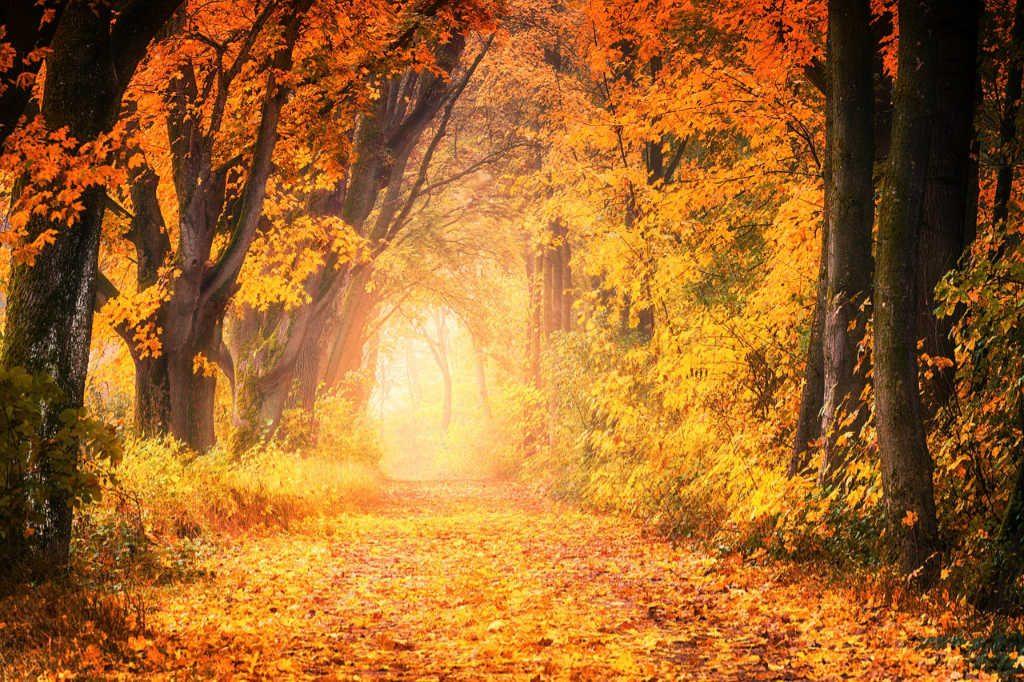 Herbst-Wald in Gold getaucht als Illustration für Holla die Waldfee Tuch aus Noro Silk Garden Sock #370. Foto: Pixabay für Noromaniac