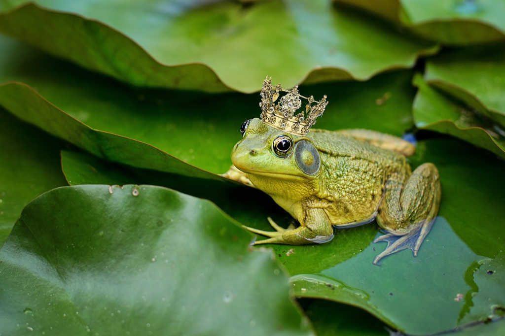 Frosch mit Krone, der Froschkönig als Illustration für Holla die Waldfee Tuch aus Noro Silk Garden Sock #370. Foto: Pixabay für Noromaniac