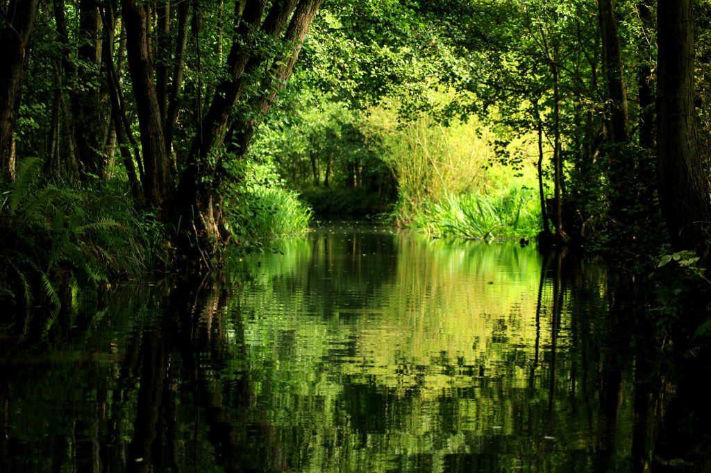 Teich im grünen Wald als Illustration für Holla die Waldfee Tuch aus Noro Silk Garden Sock #370. Foto: Pixabay für Noromaniac