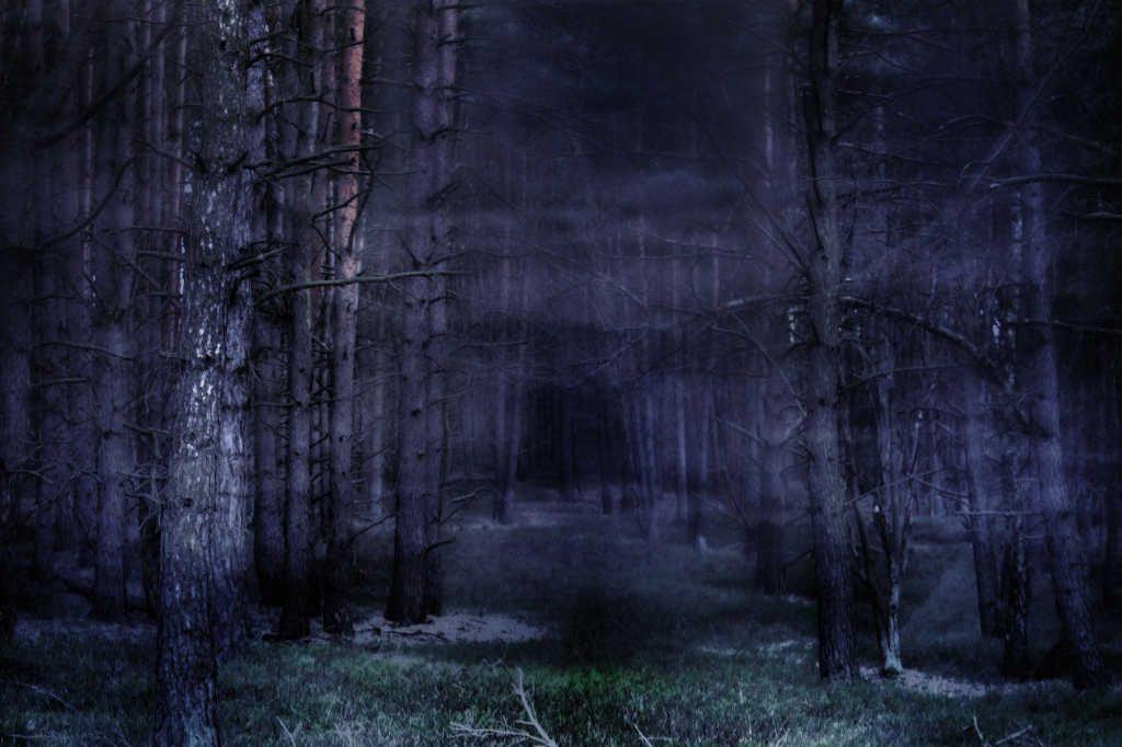 Nächtlicher Wald mit Nebel als Illustration für Holla die Waldfee Tuch aus Noro Silk Garden Sock #370. Foto: Pixabay für Noromaniac