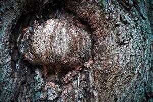 Baumrinde mit Ast, was wie ein geschlossenes Auge aussieht. Illustration für Holla die Waldfee Tuch aus Noro Silk Garden Sock #370. Foto: Pixabay für Noromaniac