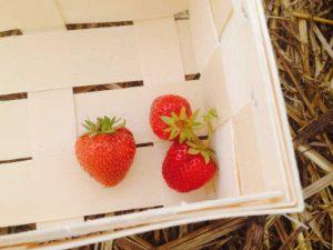 Drei Erdbeeren im Korb zur Illustration der Farben des Pullovers von Noromaniac aus Kagayaki 17.