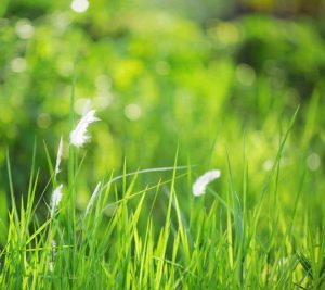 Frisches grünes Gras zur Illustration der Farben des Pullovers von Noromaniac aus der Kagayaki 17.
