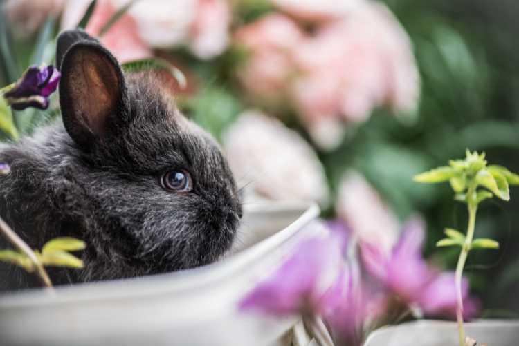 Graues Kaninchen-Baby als Illustration für das Norogarn aus Seide, Wolle, Angora und Mohair – Garn-Rezension Katrin Walter - Noromaniac