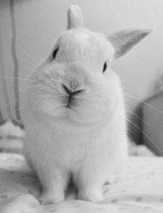 Weißes Kaninchen als Illustration für das Norogarn aus Seide, Wolle, Angora und Mohair – Garn-Rezension Katrin Walter - Noromaniac
