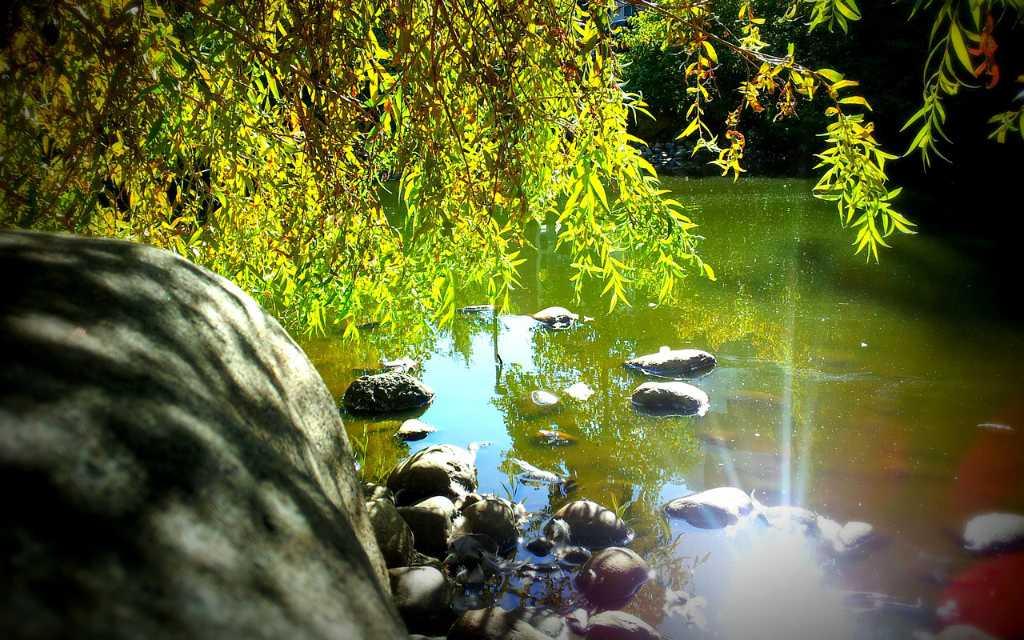 Kleiner Waldsee, in dem sich die Natur herrlich in der Sonne spiegelt. Illustration für Strickprojekt Lilly von Noromaniac (Katrin Walter)