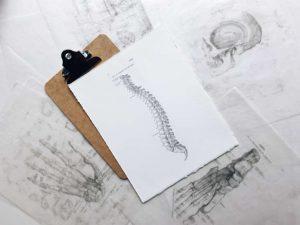 Anatomische Zeichnung einer Wirbelsäule als Illustration für den Artikel zum Columna-Pullis von Noromaniac
