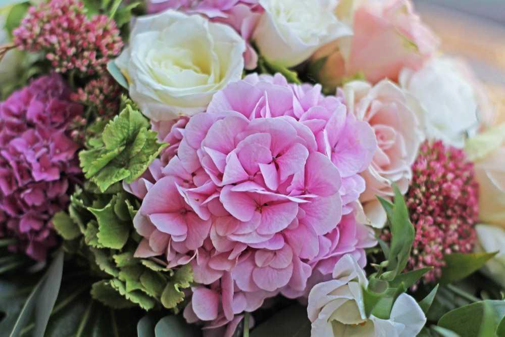 Rosa- und pinkfarbene Hortensien-Blüten in einem Blumenstrauß. Illustration für Artikel von Noromaniac