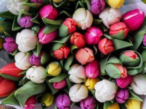 Bunte Tulpen als Illustration für die Norogarn-Beschreibung von Noromaniac